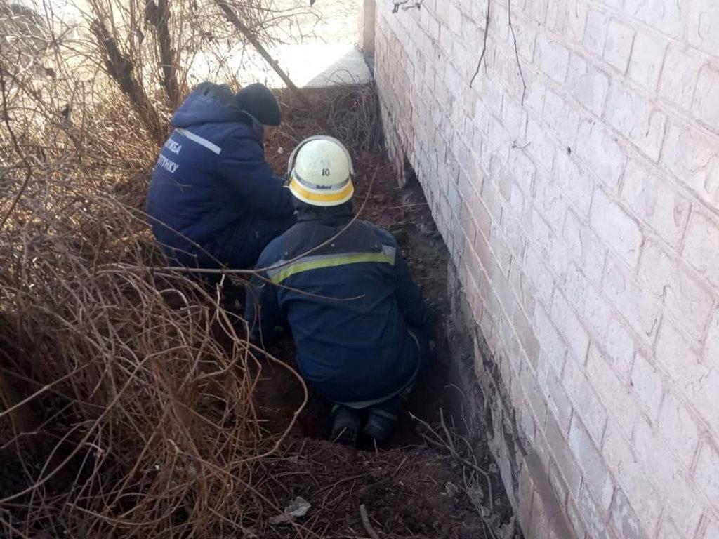 Спасатели в Кривом Роге пришли на помощь собаке, упавшей в канализационный колодец, - ФОТО, фото-1