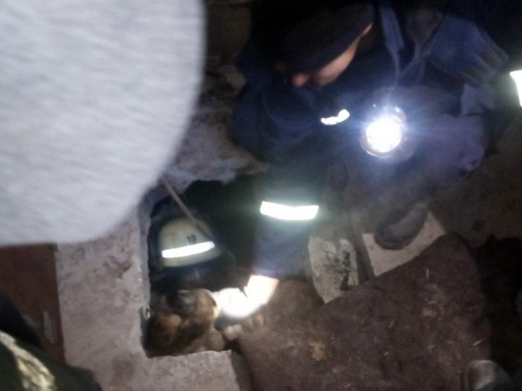 Спасатели в Кривом Роге пришли на помощь собаке, упавшей в канализационный колодец, - ФОТО, фото-4