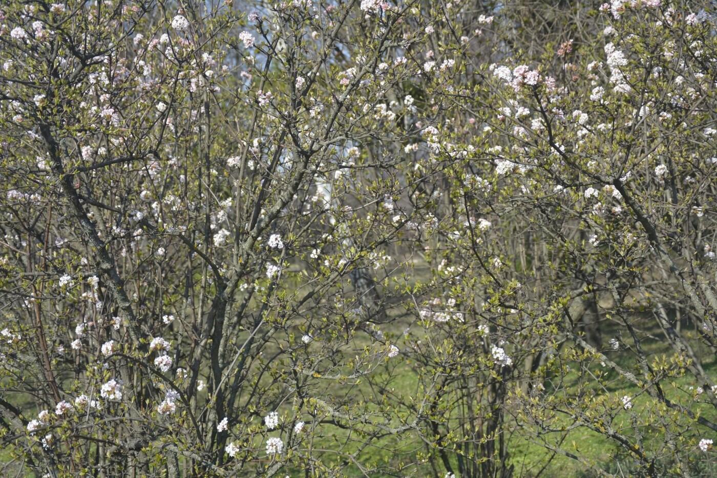 В Криворожском ботаническом саду изменили режим работы оранжереи, фото-10