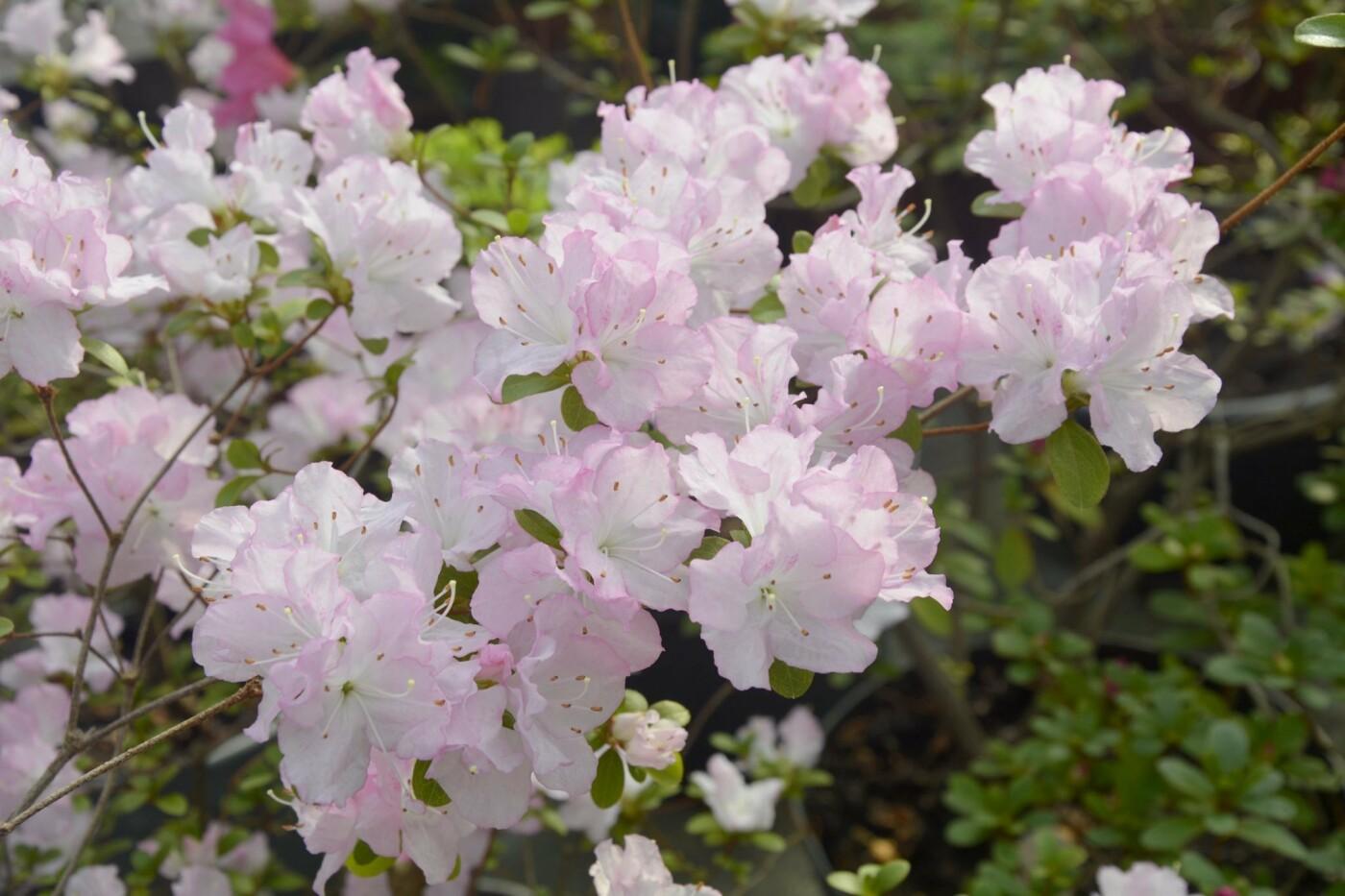 В Криворожском ботаническом саду изменили режим работы оранжереи, фото-2