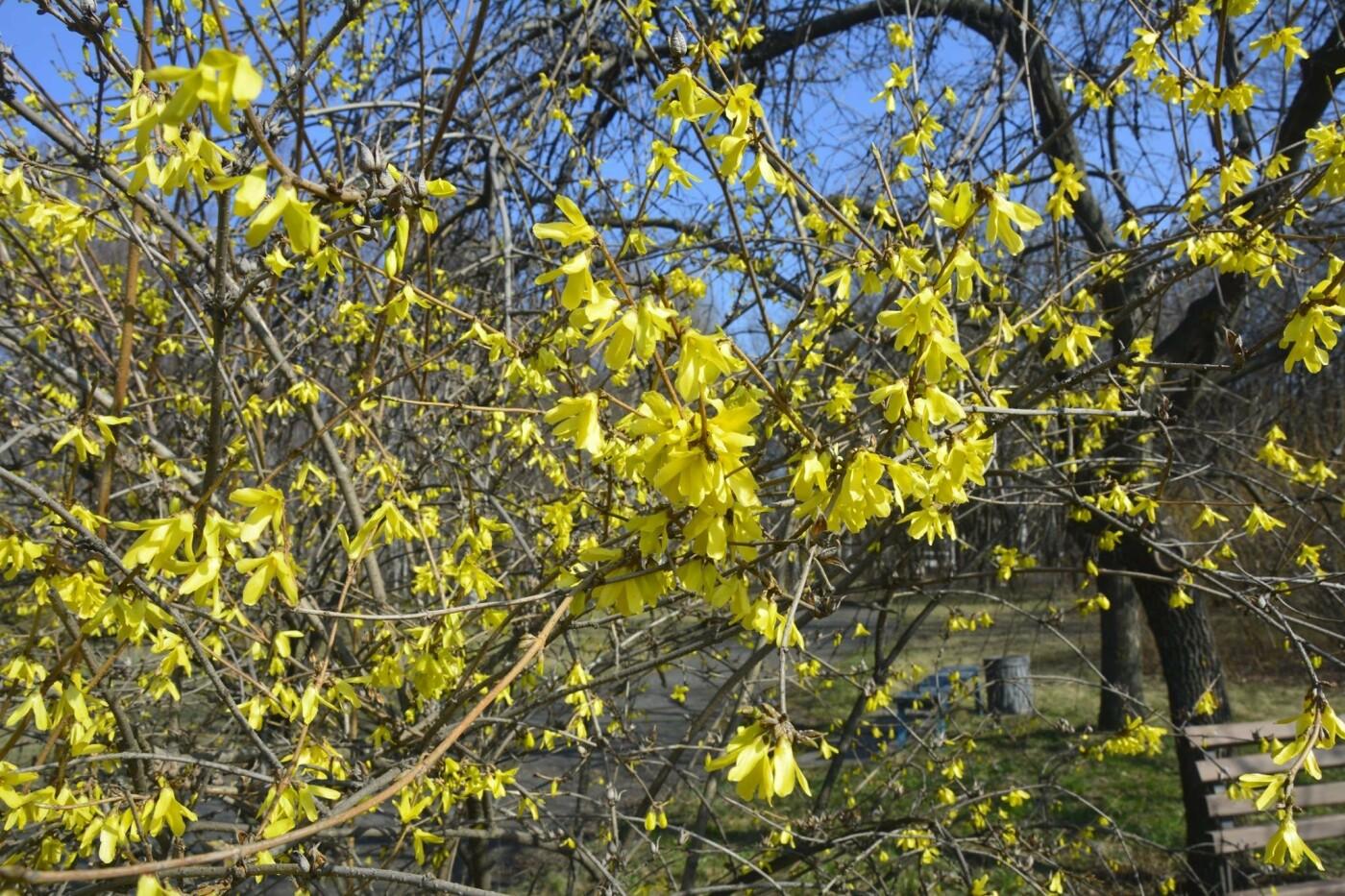В Криворожском ботаническом саду изменили режим работы оранжереи, фото-6