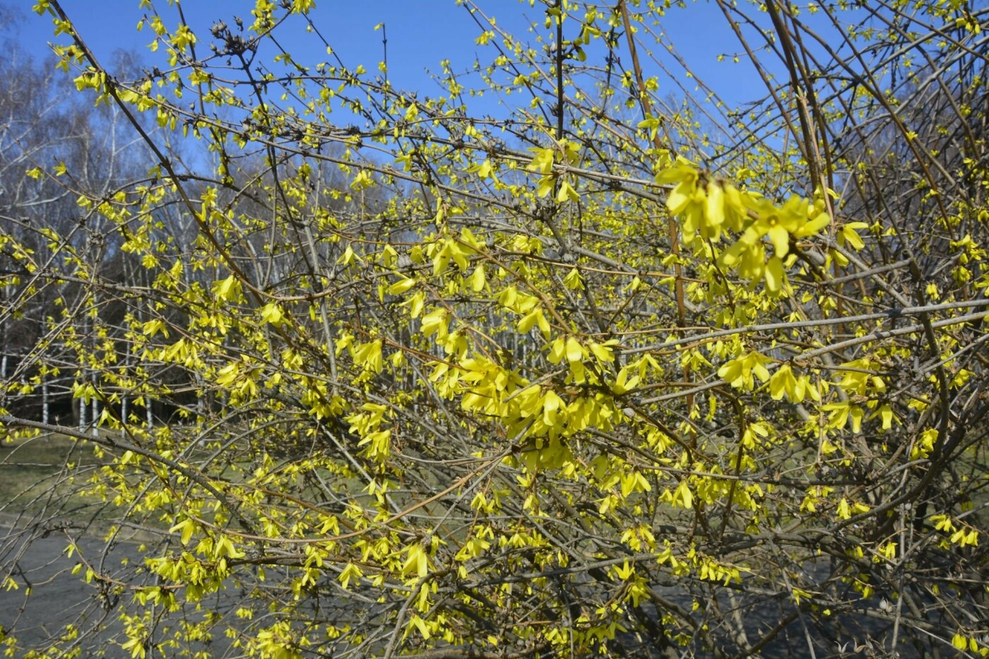 В Криворожском ботаническом саду изменили режим работы оранжереи, фото-5
