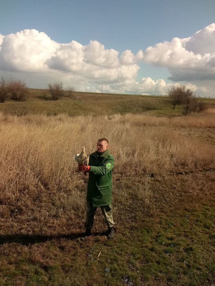На Криворожье охотники выпустили в дикую природу фазанов, - ФОТО , фото-7