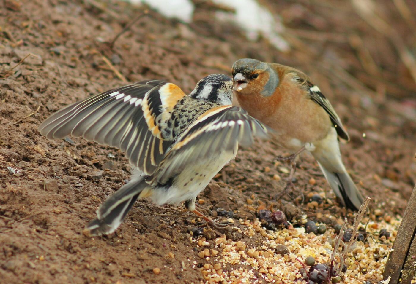 Какие они  красивые! - многих птиц, живущих на Криворожье, пользователи соцсетей впервые увидели крупным планом,  - ФОТО, фото-3