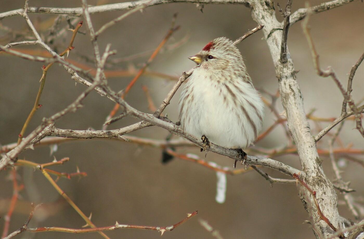 Какие они  красивые! - многих птиц, живущих на Криворожье, пользователи соцсетей впервые увидели крупным планом,  - ФОТО, фото-10