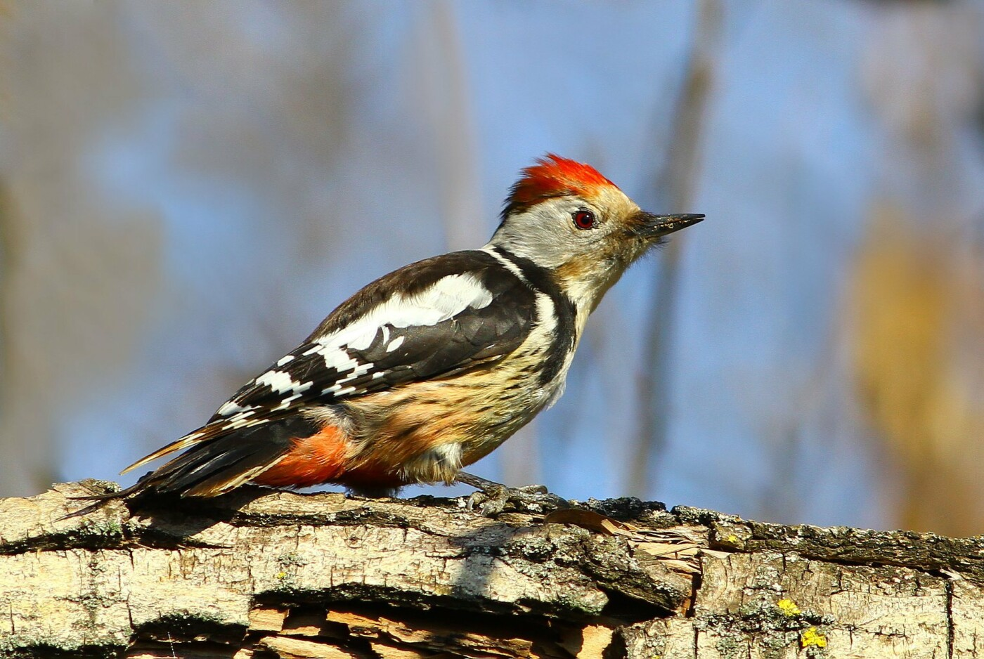 Какие они  красивые! - многих птиц, живущих на Криворожье, пользователи соцсетей впервые увидели крупным планом,  - ФОТО, фото-13