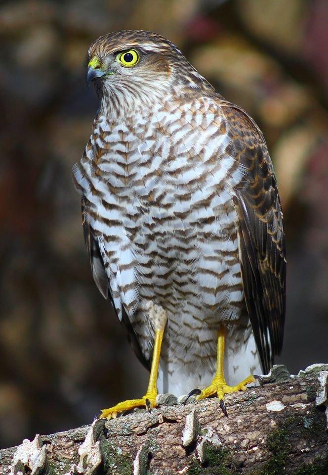 Какие они  красивые! - многих птиц, живущих на Криворожье, пользователи соцсетей впервые увидели крупным планом,  - ФОТО, фото-19