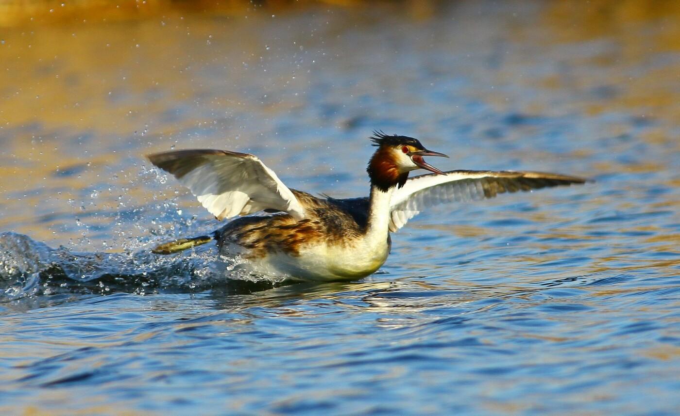 Какие они  красивые! - многих птиц, живущих на Криворожье, пользователи соцсетей впервые увидели крупным планом,  - ФОТО, фото-14