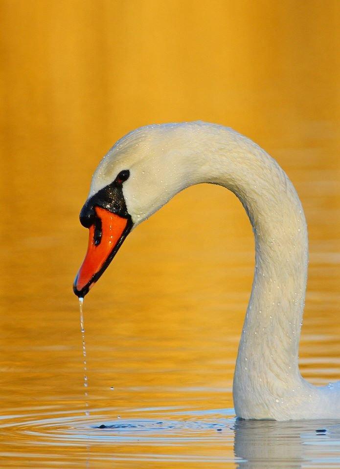 Какие они  красивые! - многих птиц, живущих на Криворожье, пользователи соцсетей впервые увидели крупным планом,  - ФОТО, фото-8