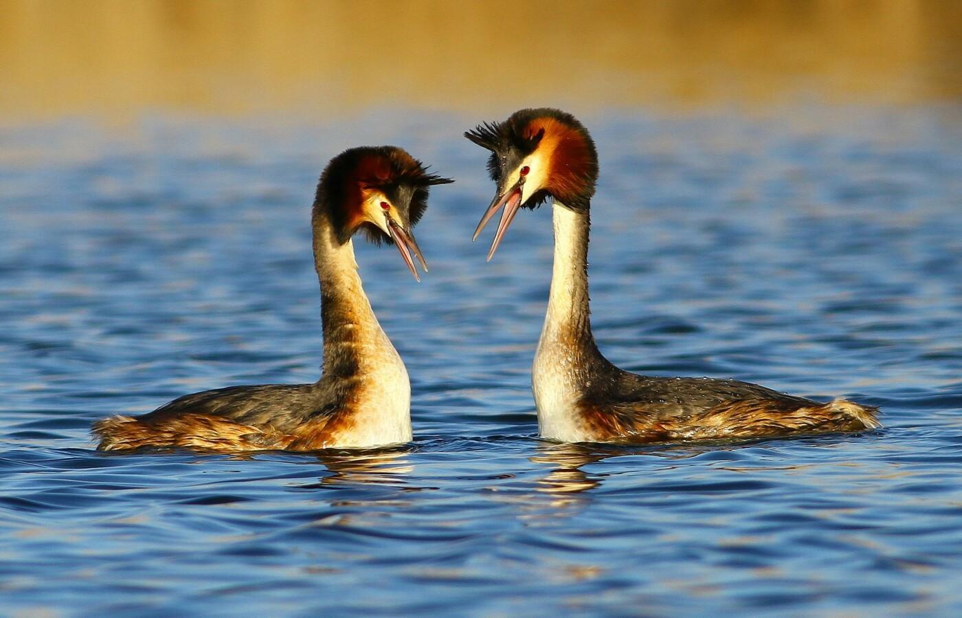 Какие они  красивые! - многих птиц, живущих на Криворожье, пользователи соцсетей впервые увидели крупным планом,  - ФОТО, фото-11