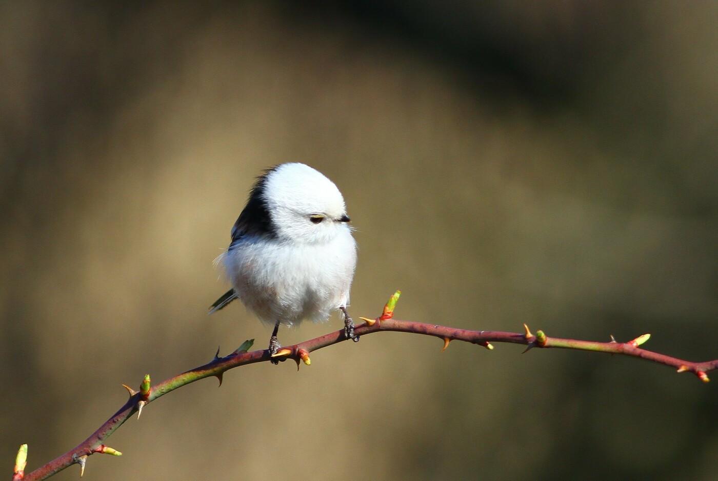 Какие они  красивые! - многих птиц, живущих на Криворожье, пользователи соцсетей впервые увидели крупным планом,  - ФОТО, фото-15