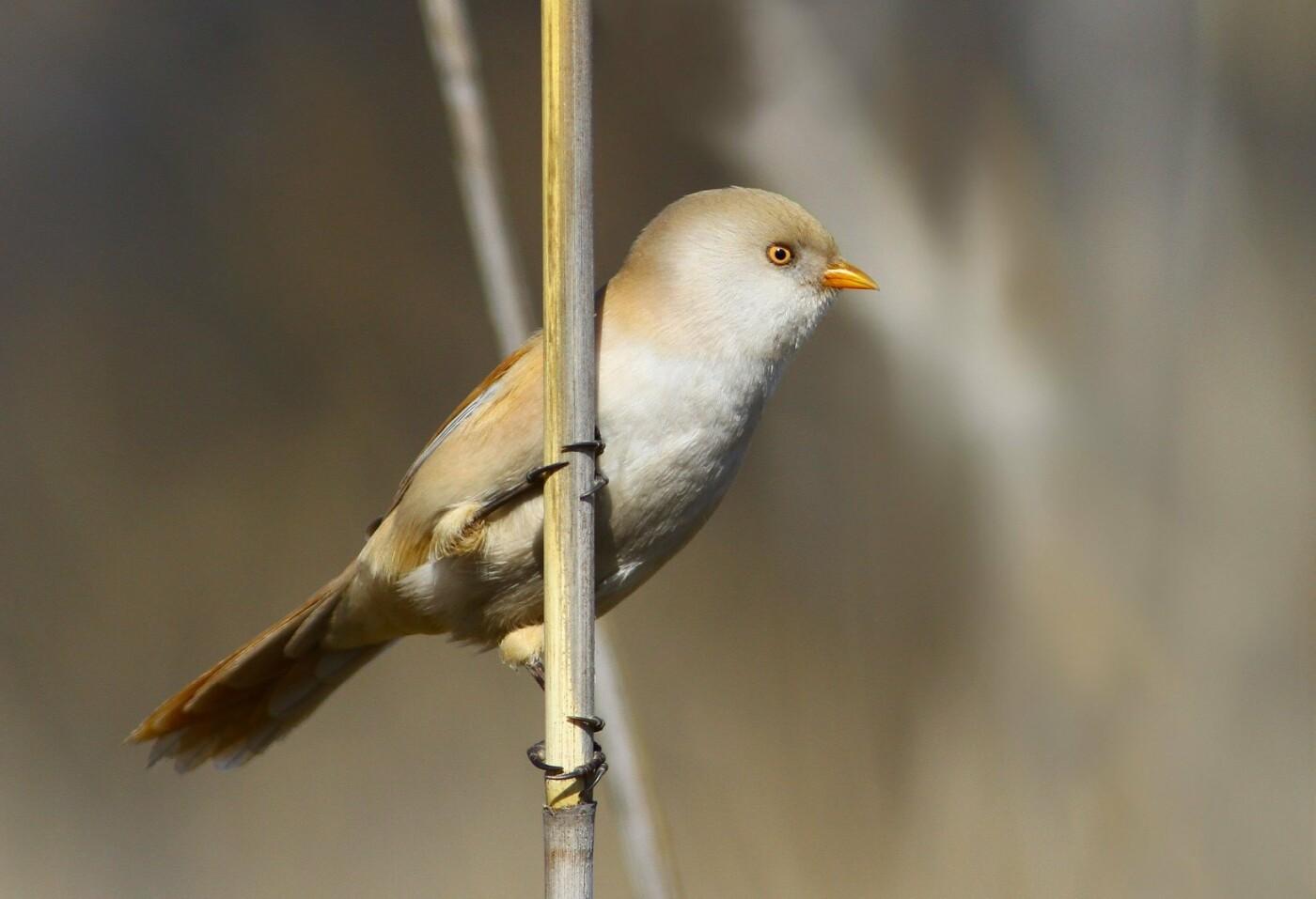 Какие они  красивые! - многих птиц, живущих на Криворожье, пользователи соцсетей впервые увидели крупным планом,  - ФОТО, фото-16