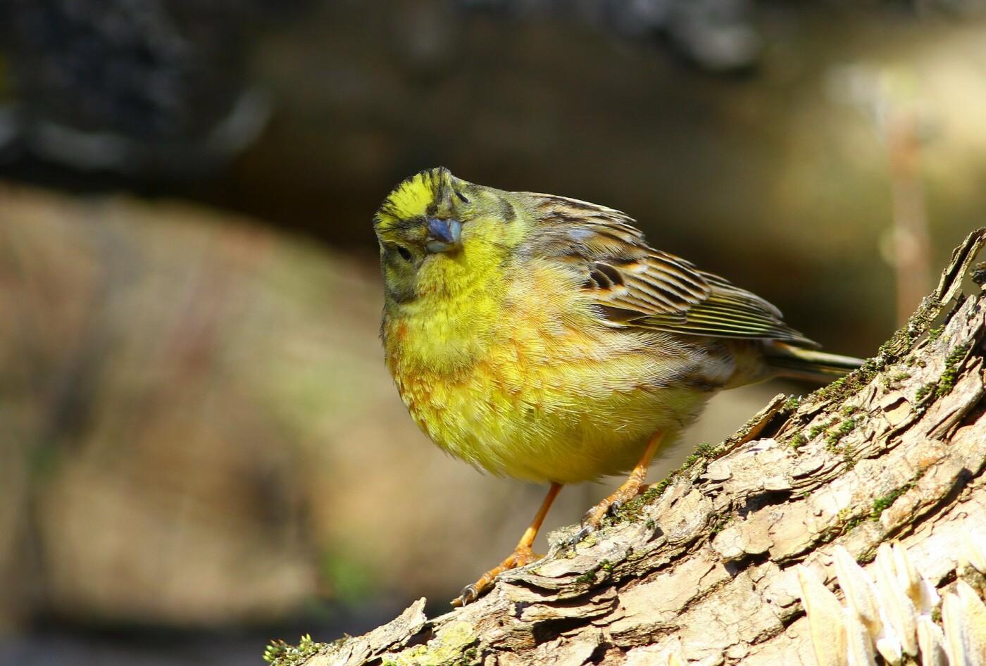 Какие они  красивые! - многих птиц, живущих на Криворожье, пользователи соцсетей впервые увидели крупным планом,  - ФОТО, фото-5