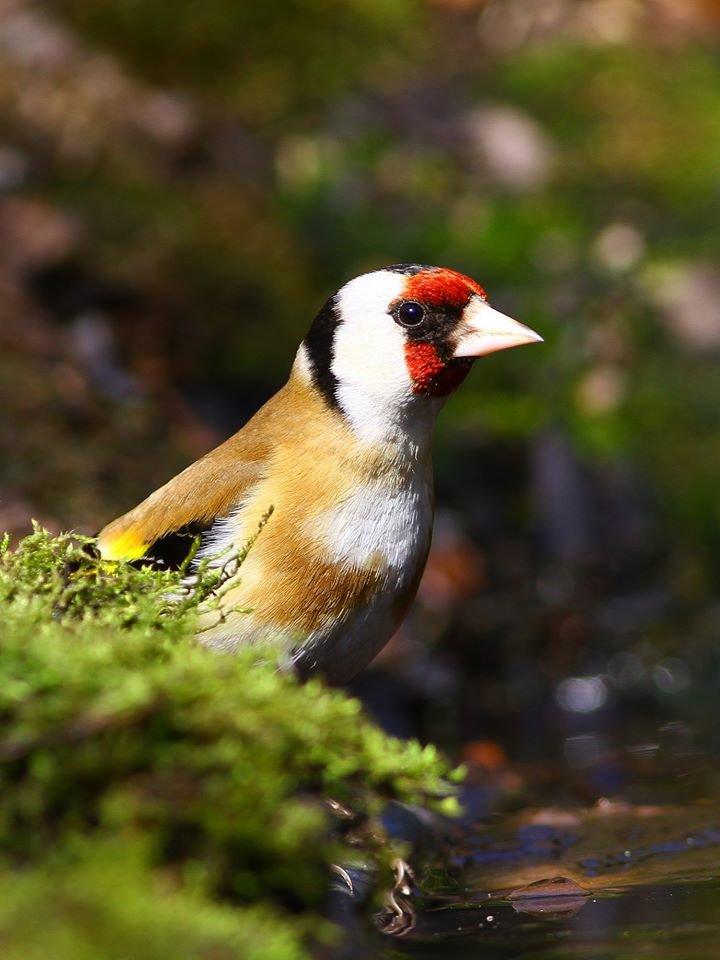 Какие они  красивые! - многих птиц, живущих на Криворожье, пользователи соцсетей впервые увидели крупным планом,  - ФОТО, фото-6