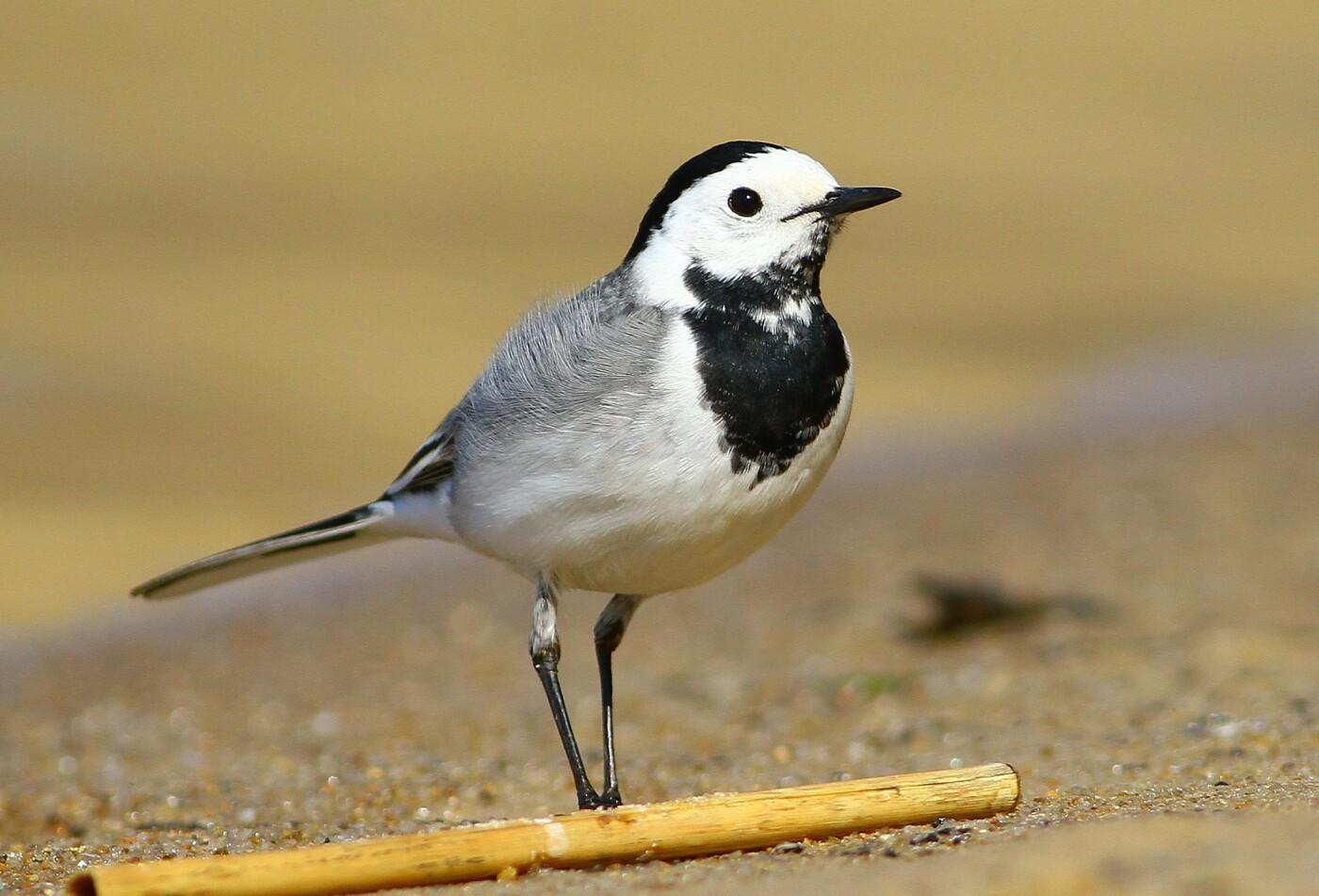 Какие они  красивые! - многих птиц, живущих на Криворожье, пользователи соцсетей впервые увидели крупным планом,  - ФОТО, фото-4