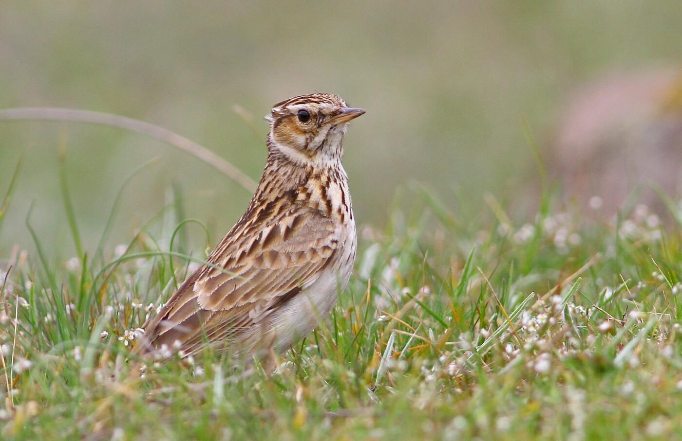 Какие они  красивые! - многих птиц, живущих на Криворожье, пользователи соцсетей впервые увидели крупным планом,  - ФОТО, фото-2