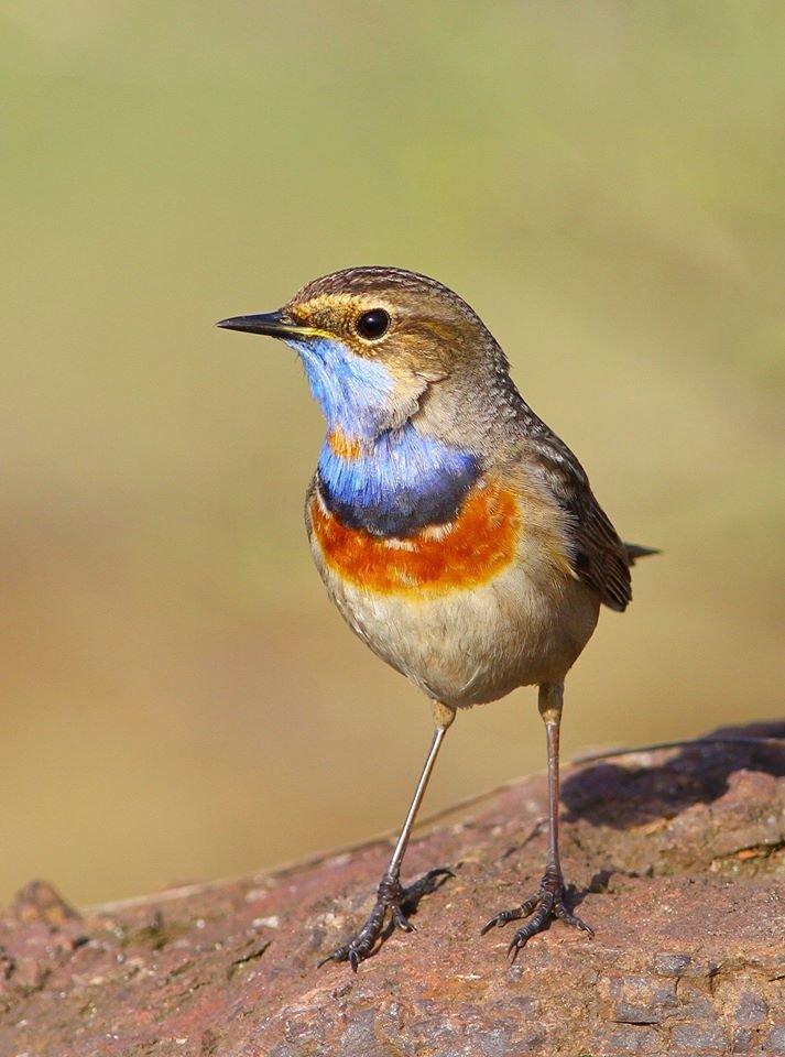 Какие они  красивые! - многих птиц, живущих на Криворожье, пользователи соцсетей впервые увидели крупным планом,  - ФОТО, фото-1