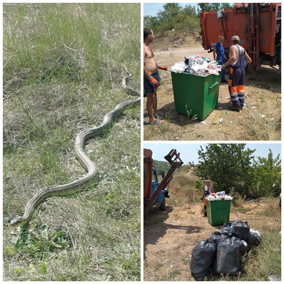 В Кривом Роге сотрудники Инспекции столкнулись с змеиной компанией, - ФОТО , фото-1