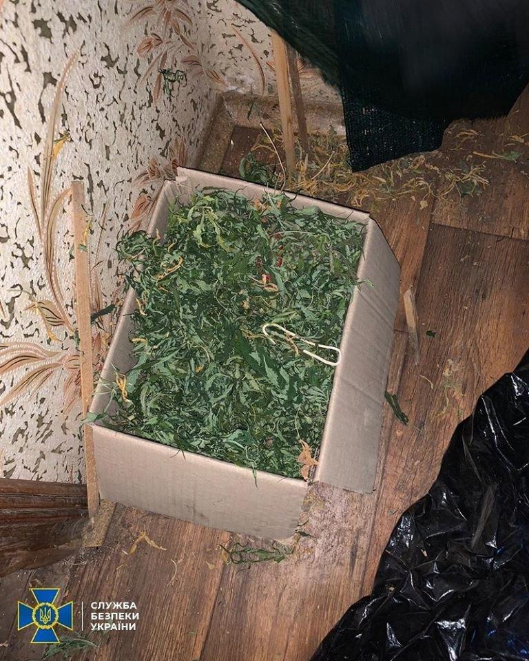 СБУ выявила на Днепропетровщине нарколабораторию с каннабисом почти на 6 млн. гривен, - ФОТО, фото-2