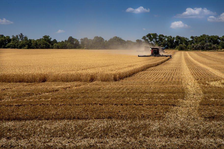 Днепропетровщина - в национальных лидерах по урожаю ранних зерновых, - ФОТО , фото-9