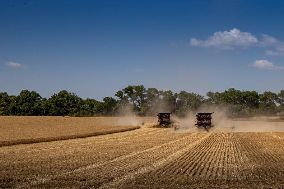 Днепропетровщина - в национальных лидерах по урожаю ранних зерновых, - ФОТО , фото-6