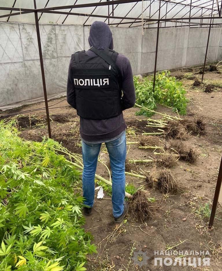 Срок украина конопля конопли 1 кг
