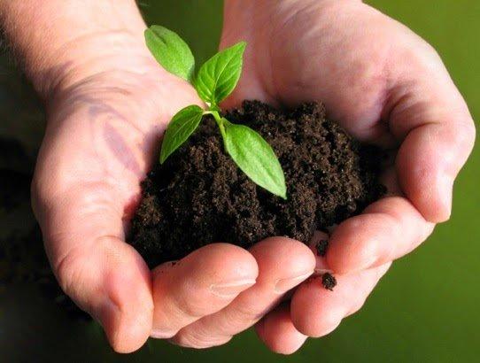 биопрепаратов для растений